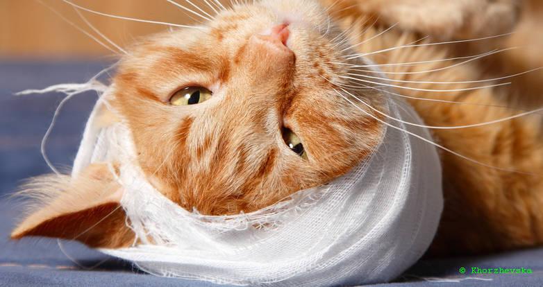 verletzte katze zugelaufen