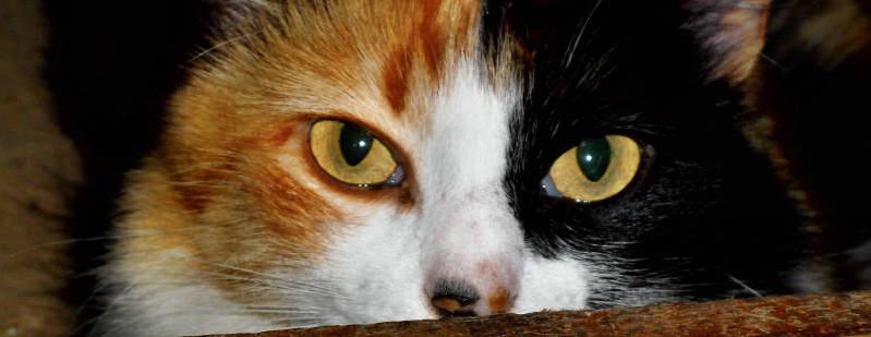 Header Katzenhilfe Radolfzell