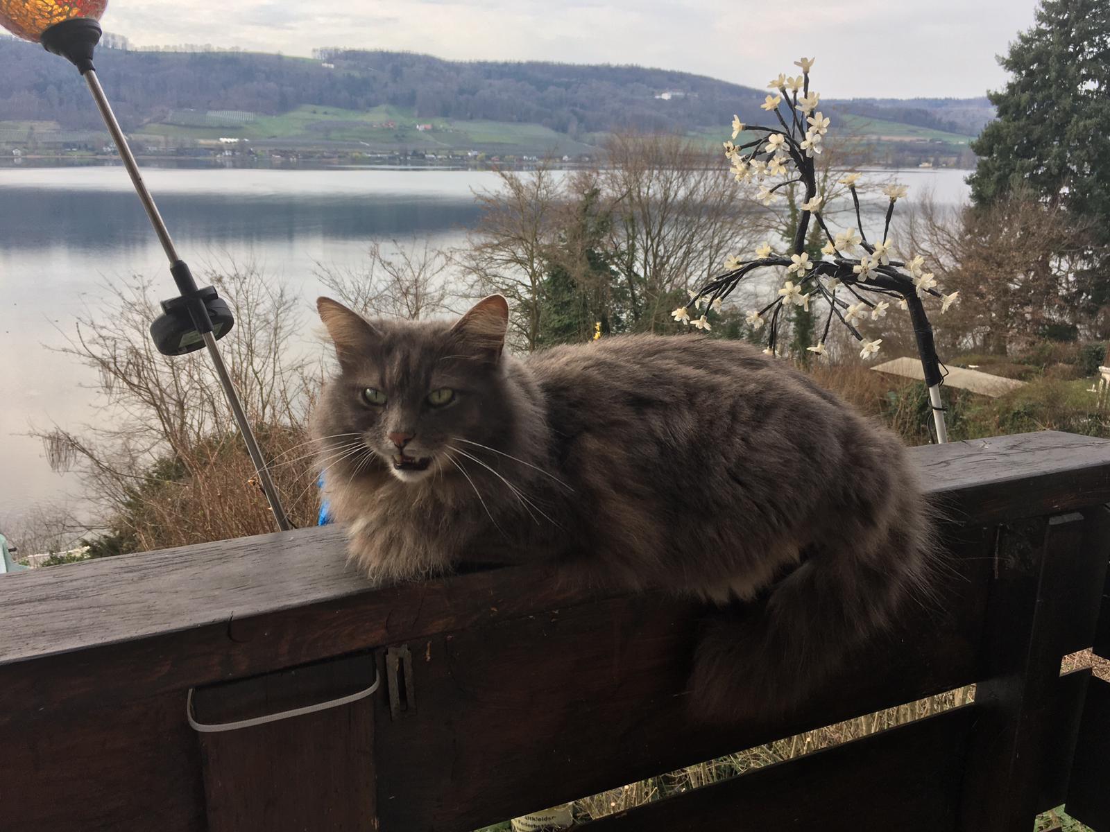 Katze in Öhningen
