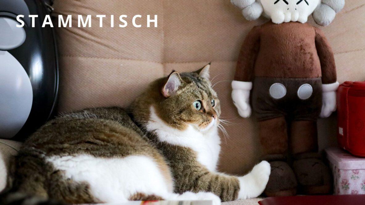 Katzenhilfe Stammtisch