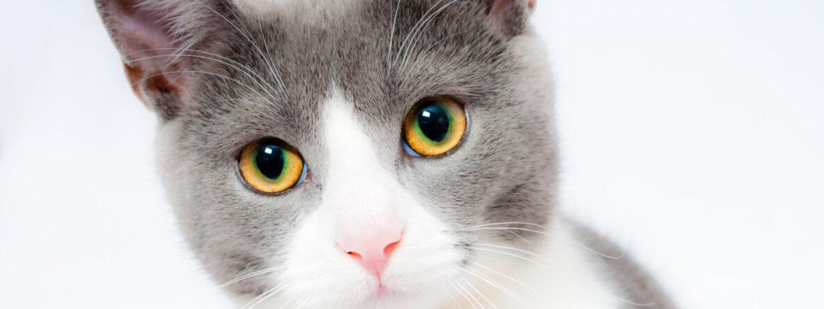 Katzenhilfe Radolfzell - Helfen