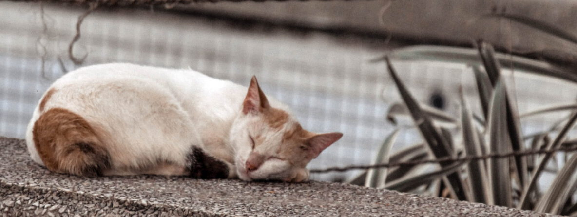Katzenhilfe Radolfzell - KaschKa